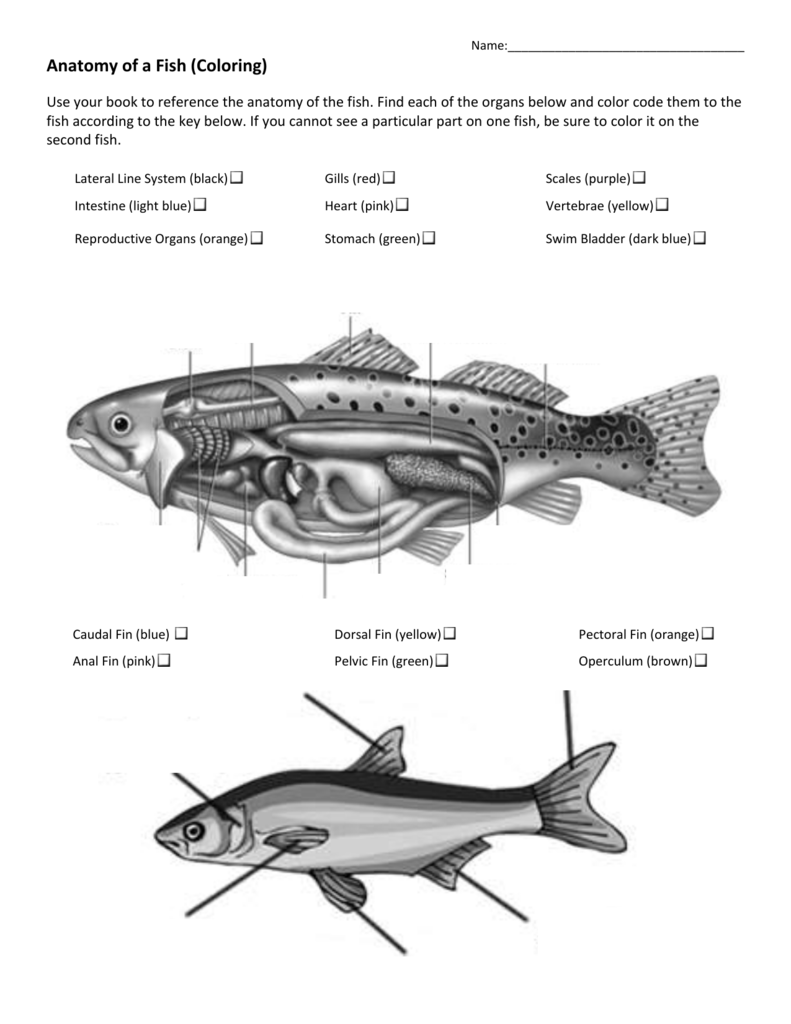Fish Coloring & Matching Worksheet