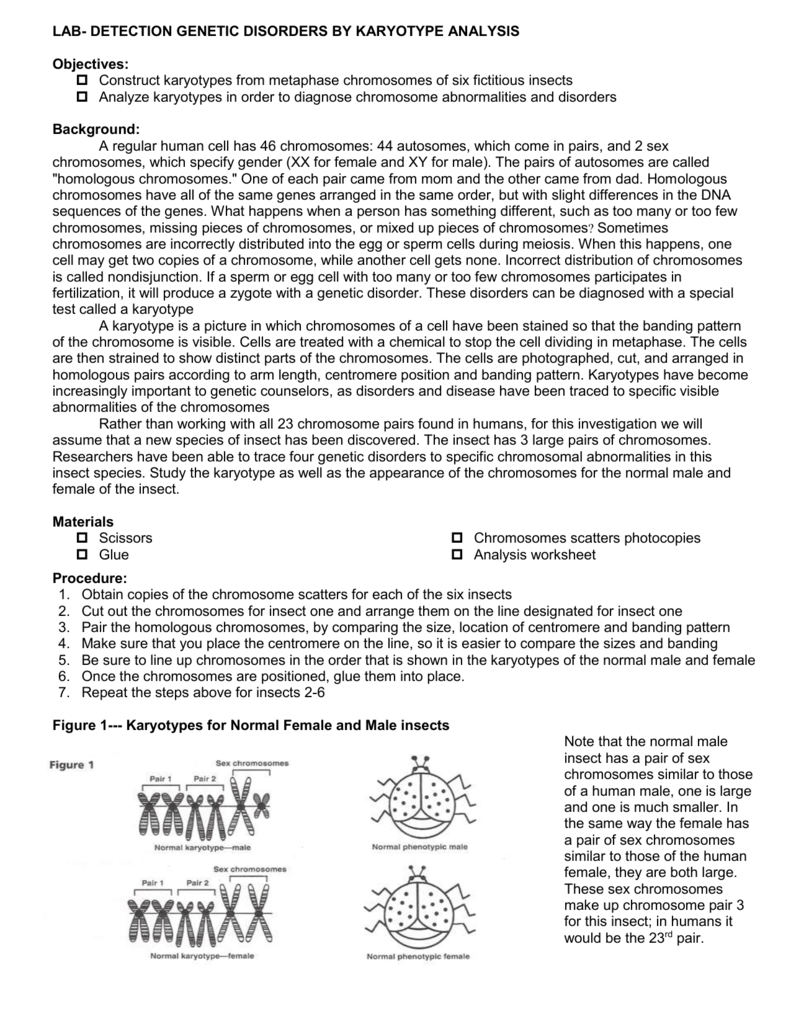 Bug Karyotype Lab - Liberty Union High School District