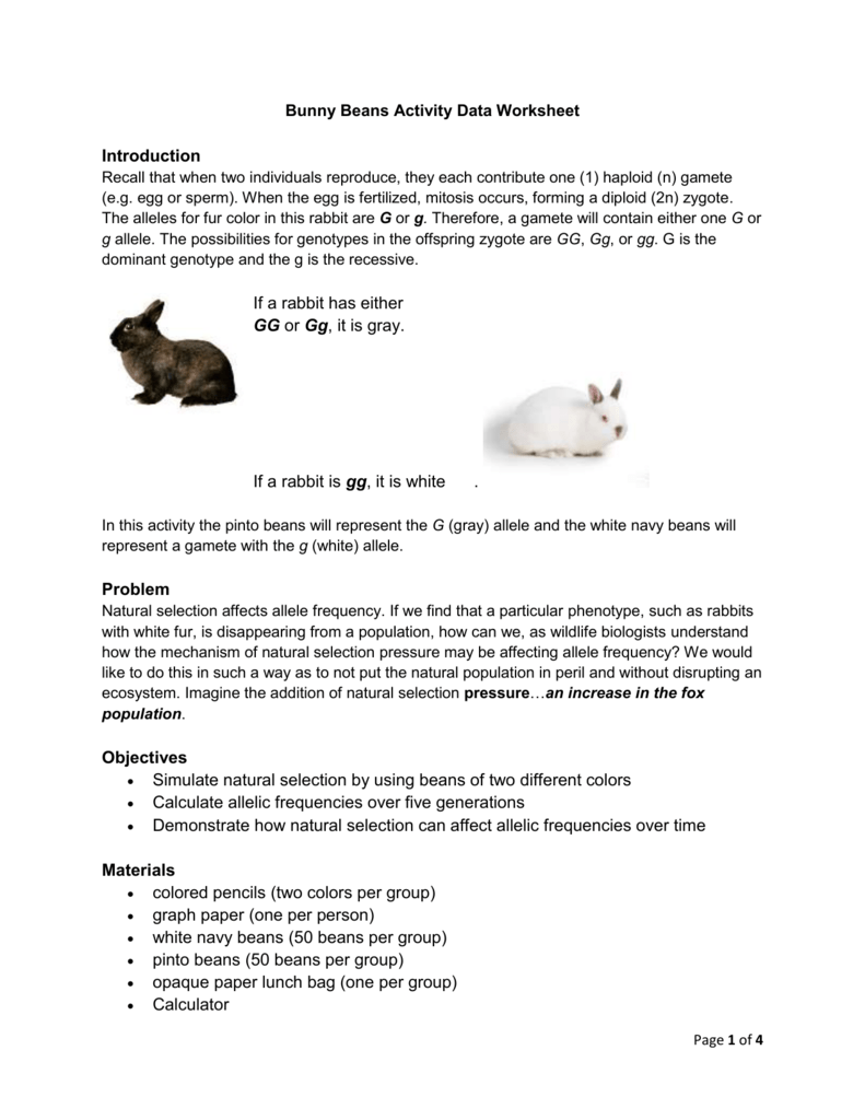 Lab Worksheet Bunny Beans Natural Selection Under