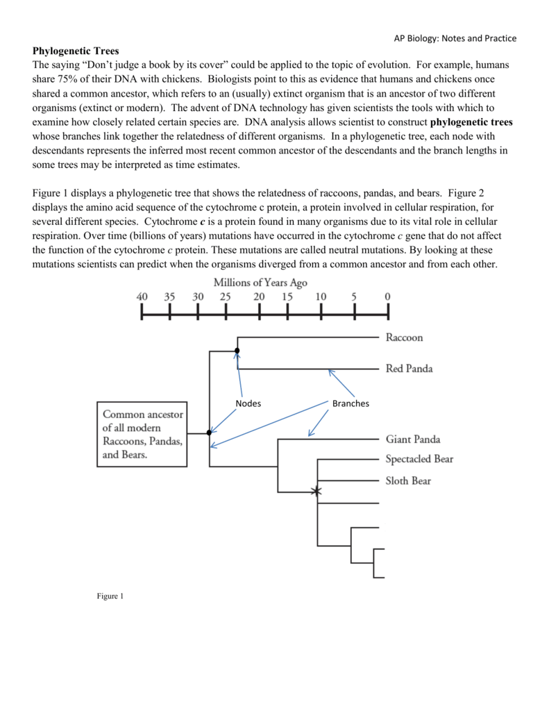 Cladogram worksheet biology answers