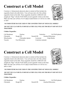 3D Cell Model Project Information