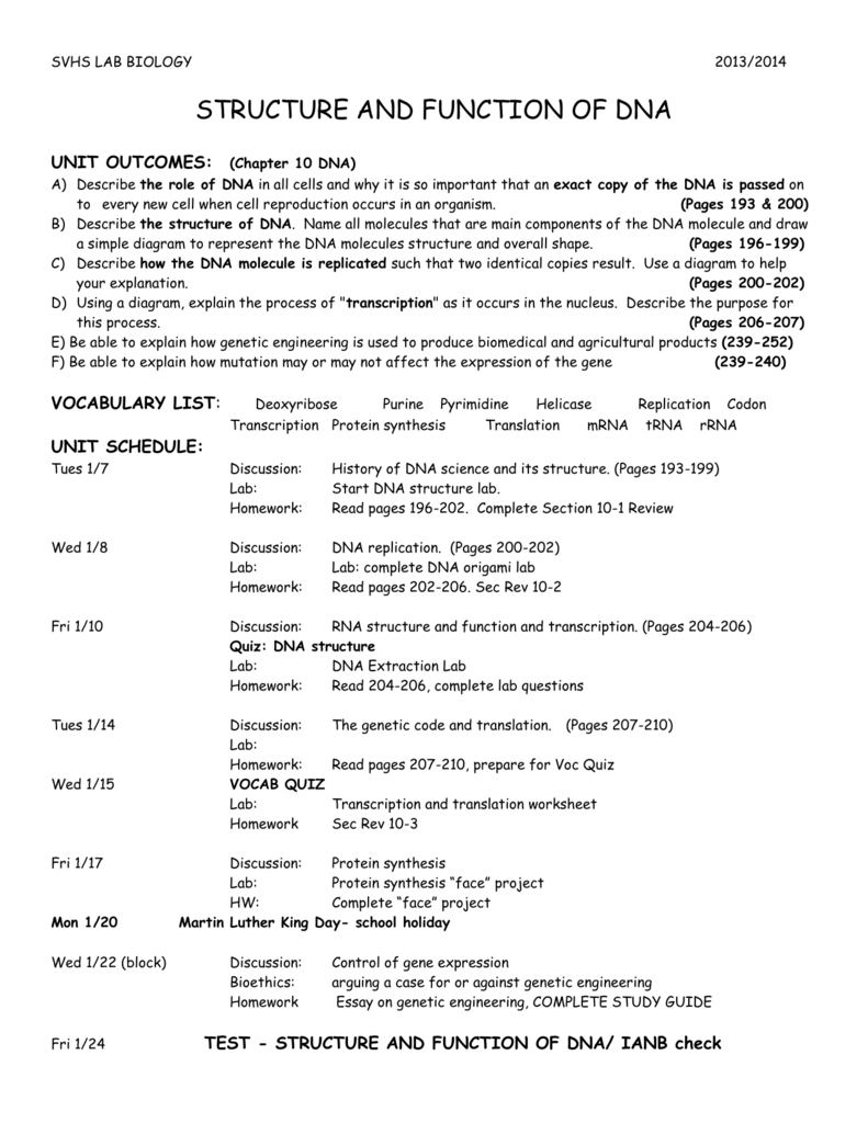 Unit 8 Direction Sheet – Gene Expression Worksheet