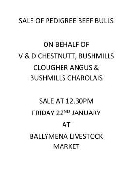SALE OF PEDIGREE BEEF BULLS ON BEHALF OF V & D