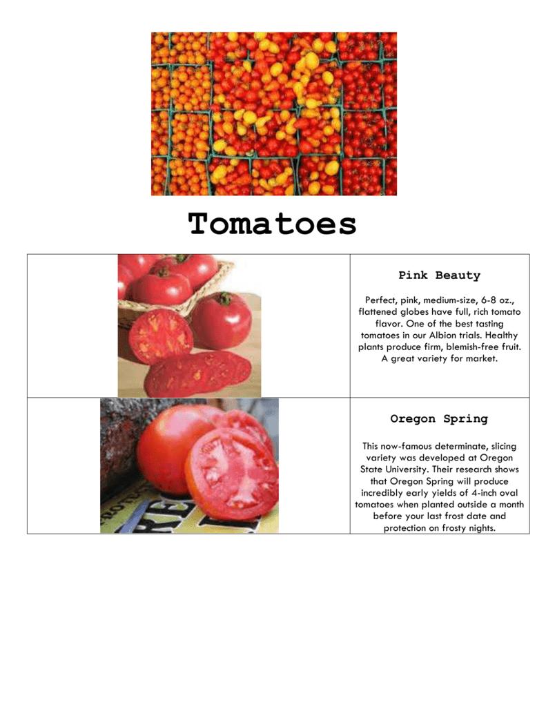Best Greenhouse Tomato Varieties