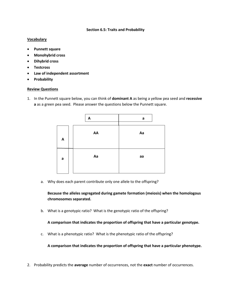 Section 65 Study Guide – Monohybrid Cross Worksheet Answers