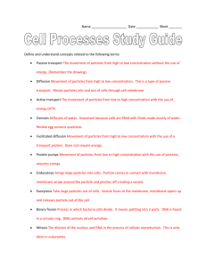 Cell Processes Study Guide OL Answer Key
