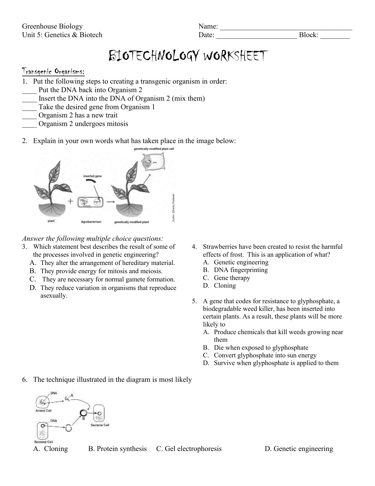 Gel Electrophoresis Worksheet Answer Key - Worksheet List