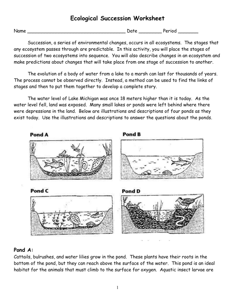 Ecological Succession Worksheet pond KEY