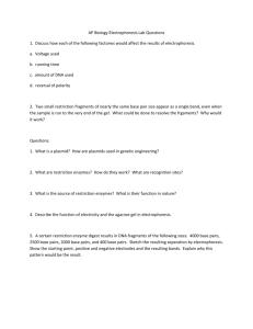 Gel Electrophoresis Virtual Lab Worksheet Answer Key