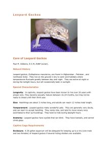 Leopard Gecko Care Sheet By Steve Sykes