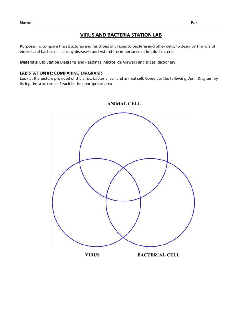 Venn Diagram Of Bacteria Animal And Plant Cells Cell Labelled 007040962 1 E060b13d494cbe5883ffea5da136acc0