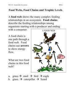 02 Food webs Chains Trophic levels Notes