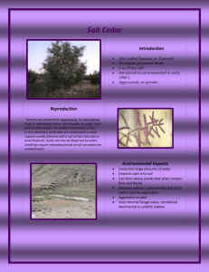 Salt Cedar Introduction - Johnson County Weed & Pest