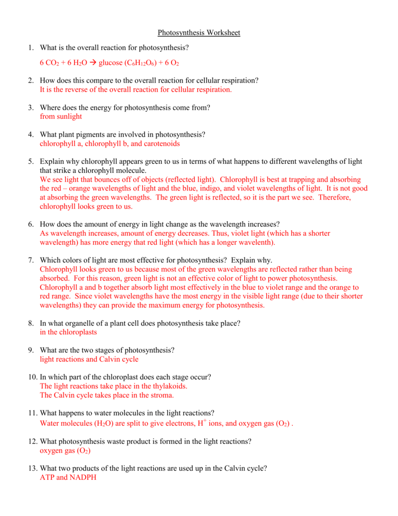 Uncategorized Calvin Cycle Worksheet photosynthesis worksheet