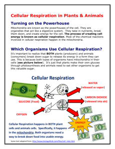 Cellular Respiration in Plants & Animals
