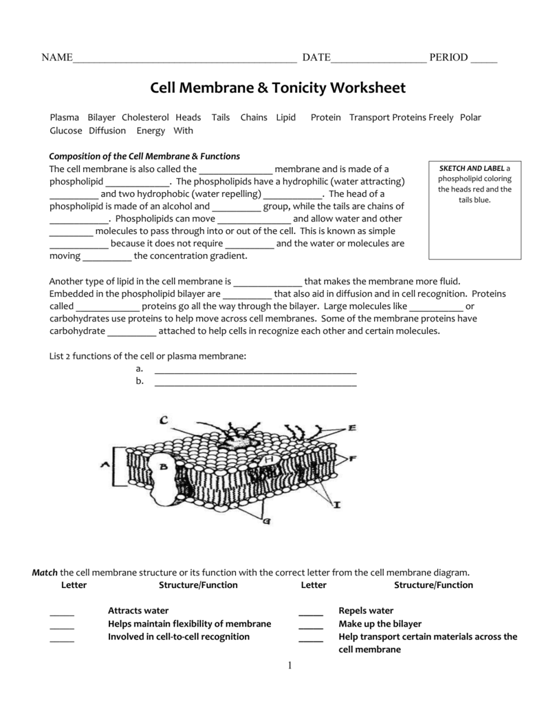 Cell membrane structure and function worksheet answers