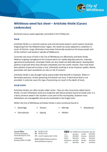 Whittlesea weed fact sheet * Artichoke thistle