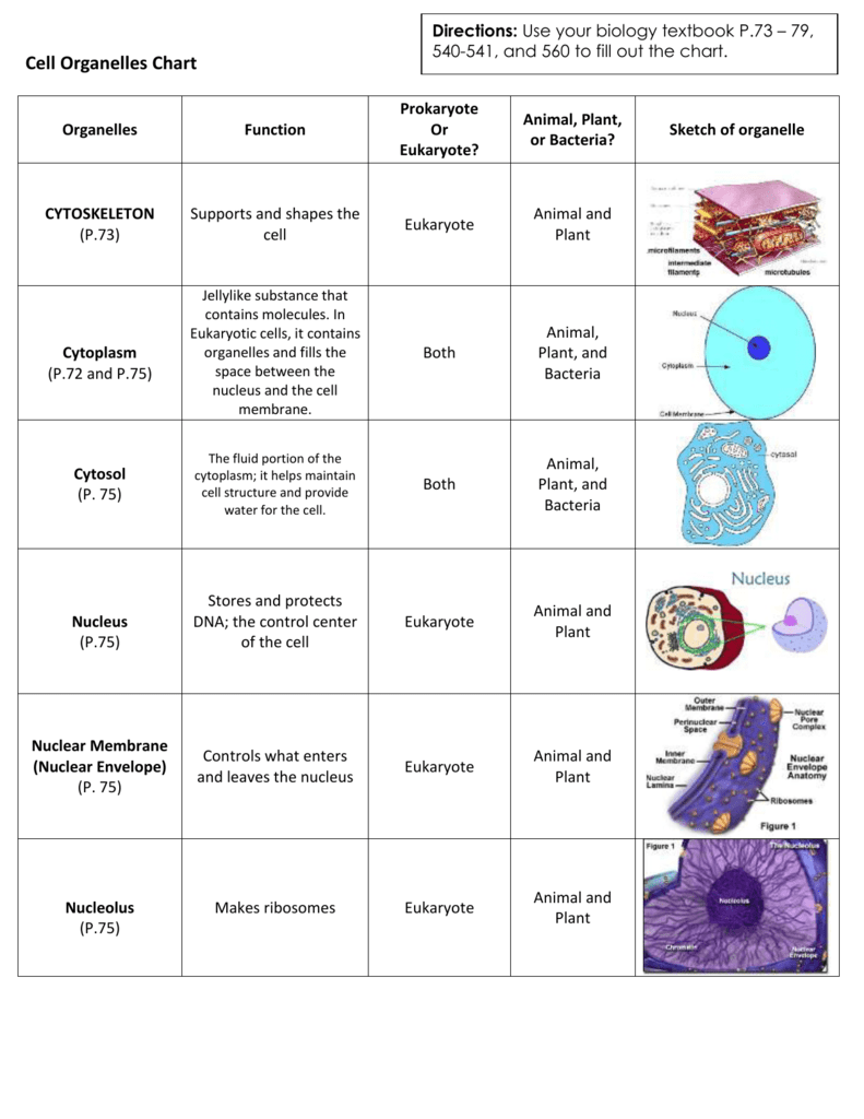 animal: Eukaryotic Animal Cell Parts And Functions
