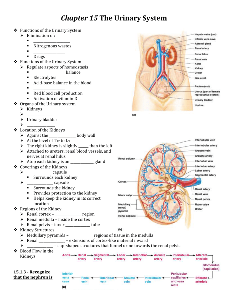 Worksheets Urinary System Worksheet chapter 15 the urinary system 007071172 1 568e2d96a809a0d434dd084c36c41cfb png