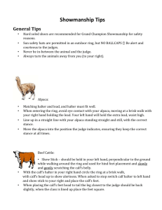 Showmanship Tips Handout