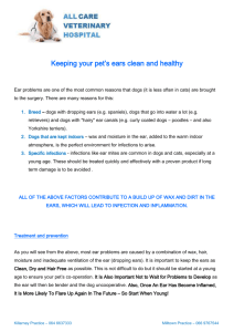 Keeping your pet`s ears clean and healthy