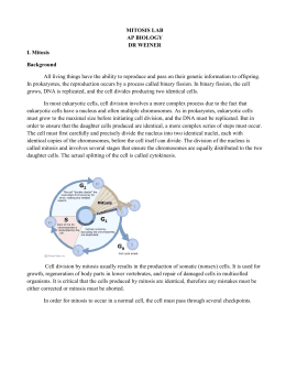 biology mitosis lab Lab 8 mitosis and meiosis (revised fall 2008) lab 8 - biol 201 - page 1 of 10 lab 8 report sheet answers to selected questions mitosis and meiosis.