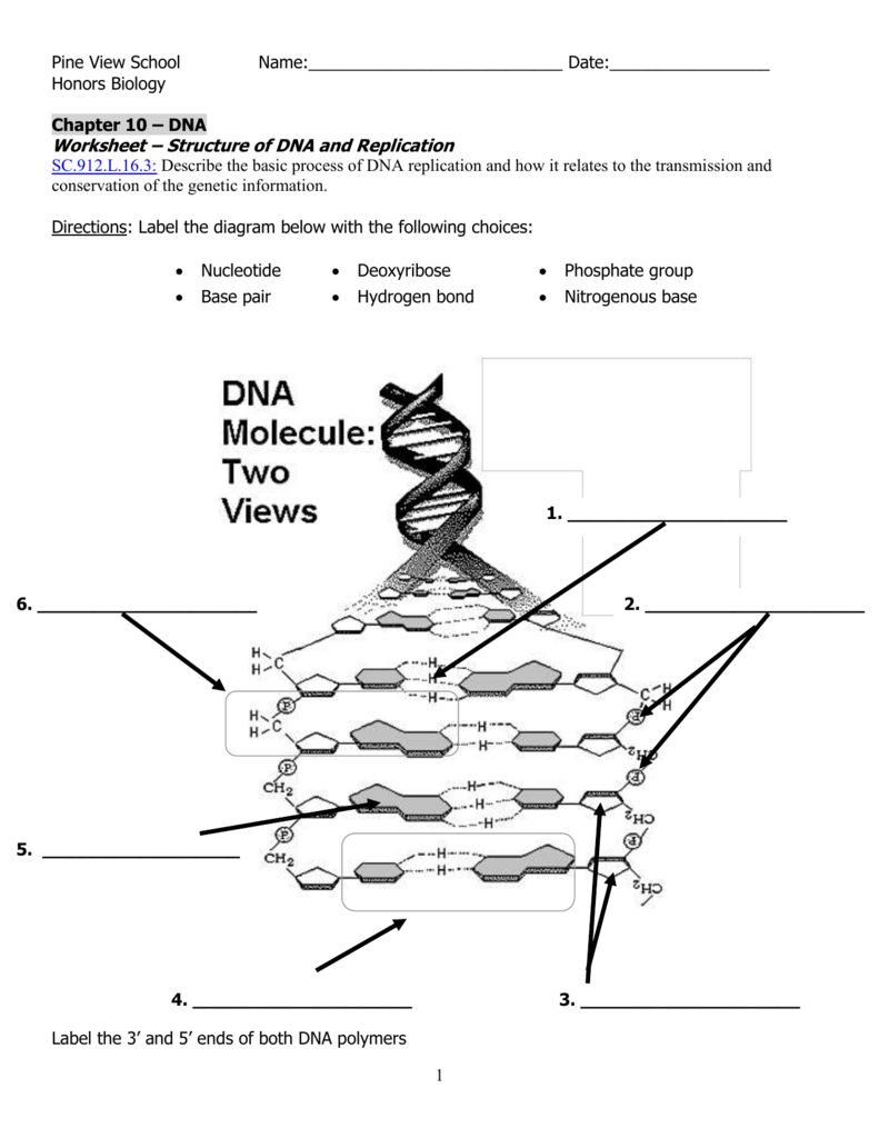 DNA worksheet – Dna Structure and Replication Worksheet