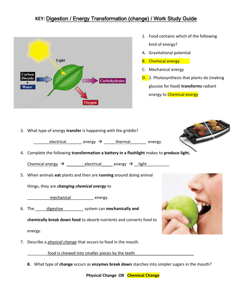 Key to Study Guide: Digestion, Energy Transformation and Work