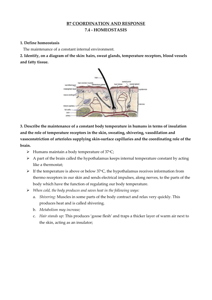 B7 4 Revision notes