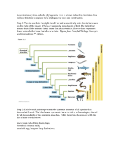 Vertebrate Phylogeny Worksheet KEY