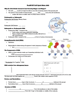 Cell Growth and Replication notes `15