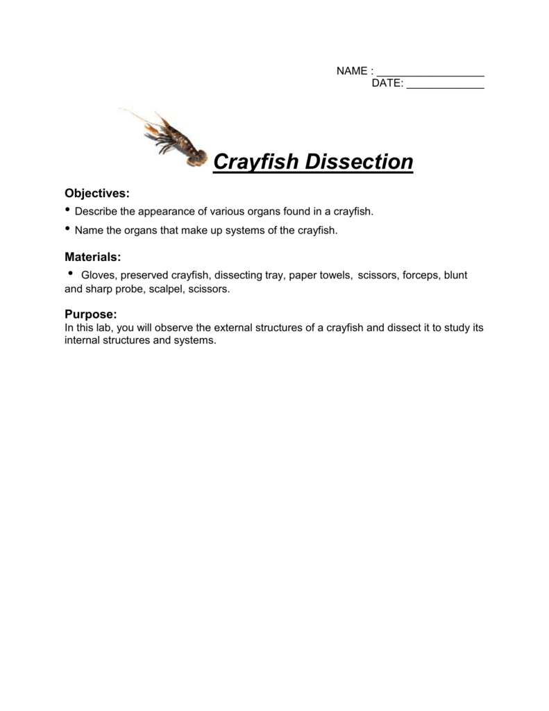 worksheet. Crayfish Dissection Worksheet. Carlos Lomas Worksheet For ...