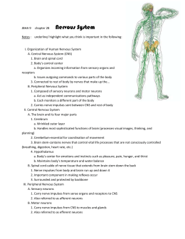 N Nervous System notes - JBHA-Sci-US-tri3