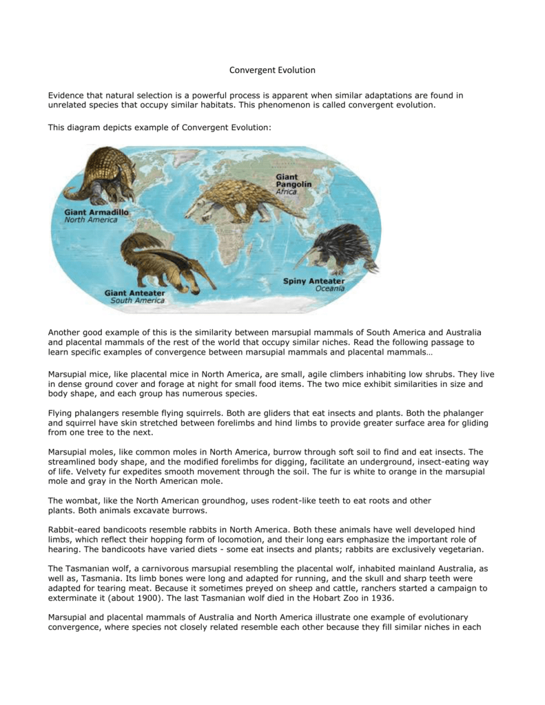Convergent Evolution Evidence That Natural Selection Is A Powerful