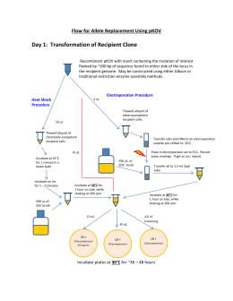 gateway lr clonase ii reaction protocol. Black Bedroom Furniture Sets. Home Design Ideas