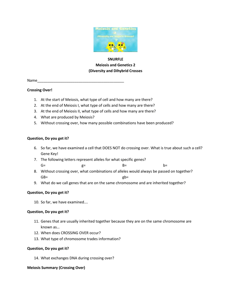 worksheet Snurfle Meiosis Worksheet independent assortmentcrossing over