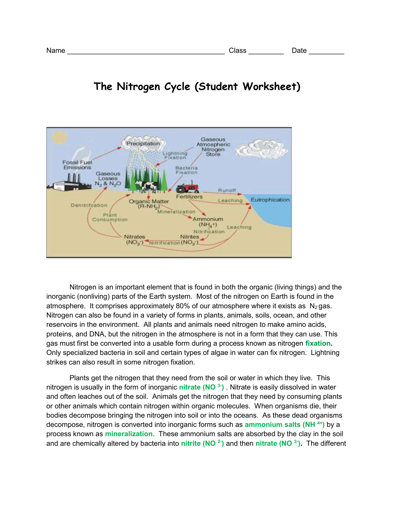 The Nitrogen Cycle (Student Worksheet)