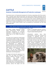 Cattle Honduras factsheet_final2