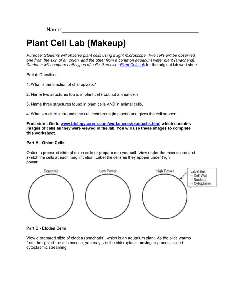 Plant cell virtual lab
