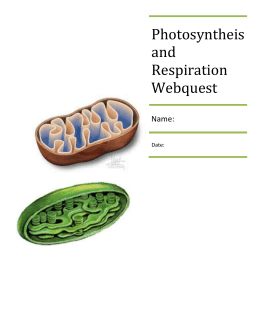 Photosyntheis and Respiration Webquest