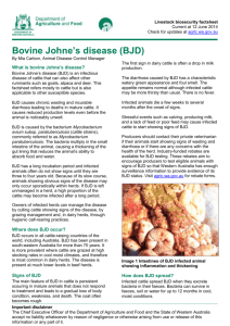 What is bovine Johne`s disease? - Department of Agriculture and Food