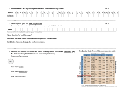 Transcription (you are RNA polymerase) SET A