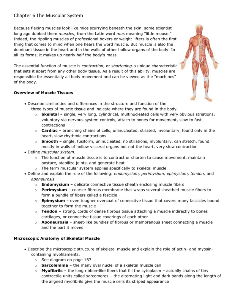 worksheet Muscles Worksheet Overview Of Muscle Tissues Answers 007211774 1 d3e79c1bbe9a73ff117a7e95c6ef79d0 png