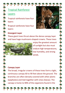 Tropical Rainforest Layers