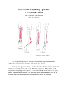 Injury to the Suspensory Ligament