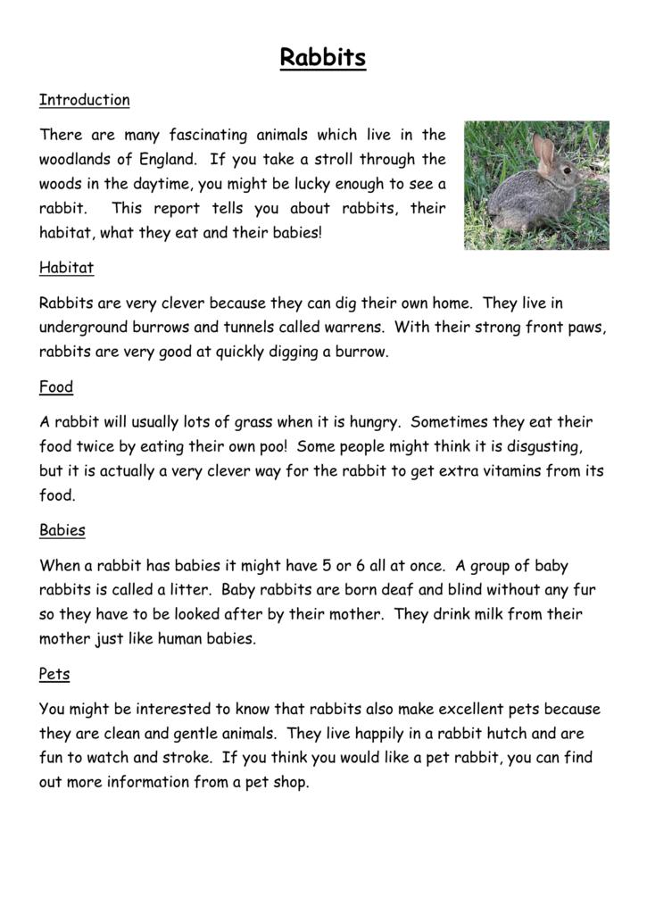 Rabbits Non Chronological Report