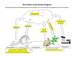 Carbon Cycle Review Diagram