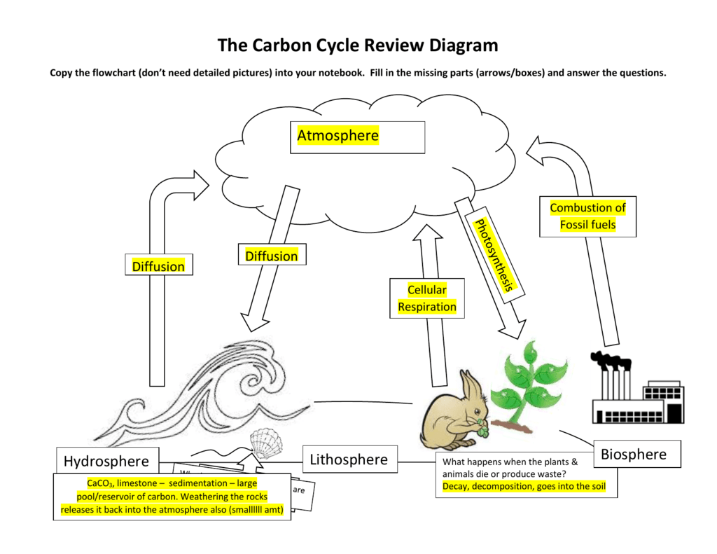 carbon cycle review diagram. Black Bedroom Furniture Sets. Home Design Ideas