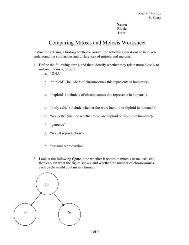 Mitosis And Meiosis Worksheet - Sharebrowse