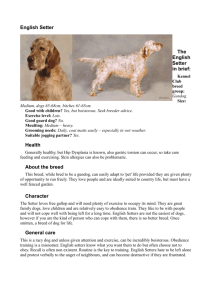 English-Setter-Breed